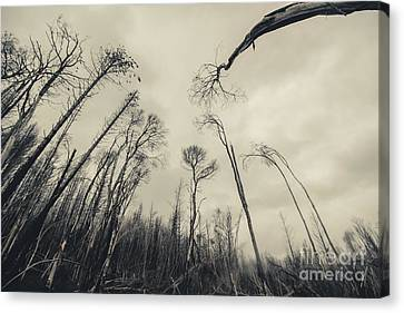 Poignant Canvas Print - Haunting Wood by Jorgo Photography - Wall Art Gallery
