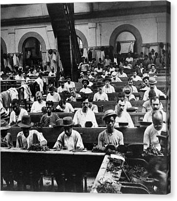 Havana Cuba - Cigars Being Rolled - C 1903 Canvas Print by International  Images