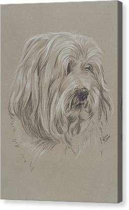 Havanese Canvas Print by Barbara Keith