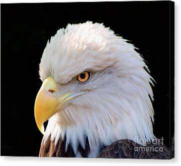 Canvas Print featuring the photograph Have My Eye On You by Ken Frischkorn