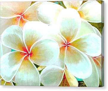 Hawaii Plumeria Frangipani Flowers #86 Canvas Print by Donald k Hall