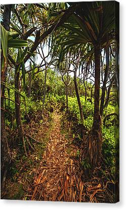 Hawaii Trail Canvas Print by Cole Pattschull