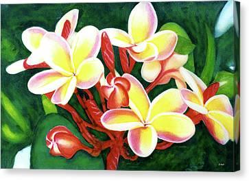 Hawaii Tropical Plumeria Flower #205 Canvas Print by Donald k Hall