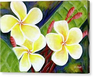 Hawaii Tropical Plumeria Flower #298, Canvas Print by Donald k Hall