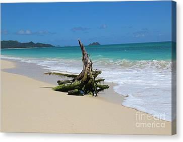Hawaiian Beach Canvas Print by Anthony Jones
