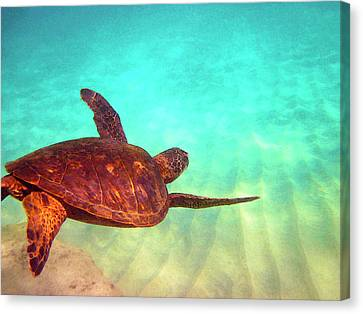 Hawaiian Green Sea Turtle Canvas Print by Bette Phelan