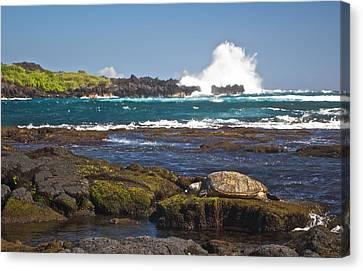 Hawaiian Green Sea Turtle  Canvas Print by James Walsh