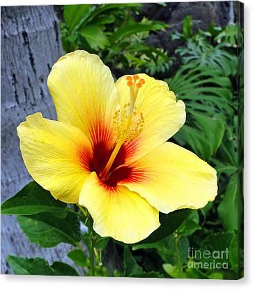 Hawaiian Hibiscus Canvas Print by Sue Melvin
