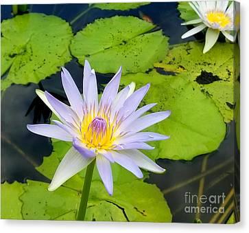 Canvas Print - Hawaiian Lotus by Kristine Merc