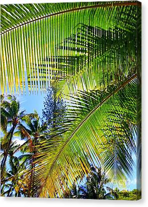 Canvas Print - Hawaiian Palm by Kristine Merc