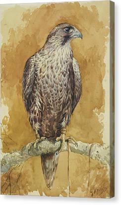 Hunting Bird Canvas Print - Hawk by Alexander Sergeevich Khrenov