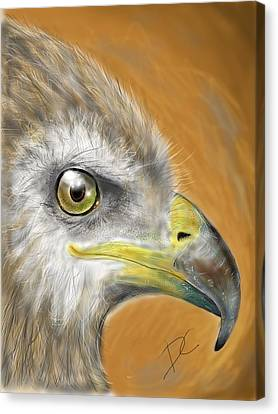 Hawk Canvas Print
