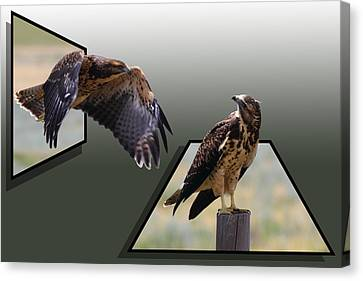 Out Of Frame Canvas Print - Hawks by Shane Bechler