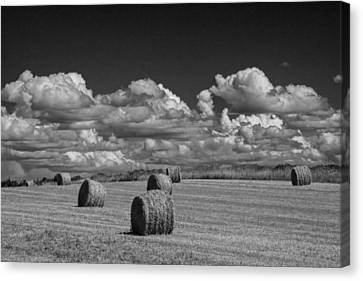 Hay Bales On A Farm Field On Prince Edward Island Canvas Print by Randall Nyhof