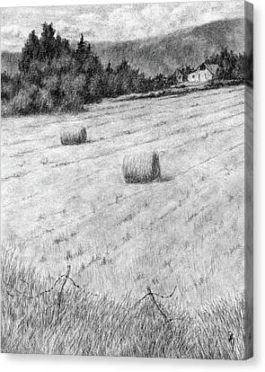 Hay Harvest Canvas Print by David King