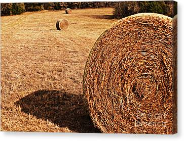 Hay In The Field Canvas Print by Tamyra Ayles