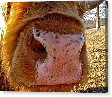 Canvas Print featuring the photograph Hay You Smell Good by Lori Miller