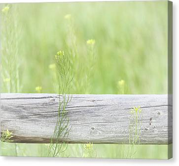 Canvas Print featuring the photograph Hazy Yellow Wildflowers by Jennie Marie Schell