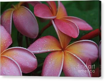 He Pua Laha Ole Aloha Hawaii Canvas Print by Sharon Mau
