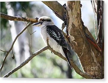 He Sings The Song Of The Bush Canvas Print by Linda Lees