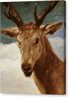 Head Of A Stag Canvas Print by Diego Rodriguez de Silva y Velazquez