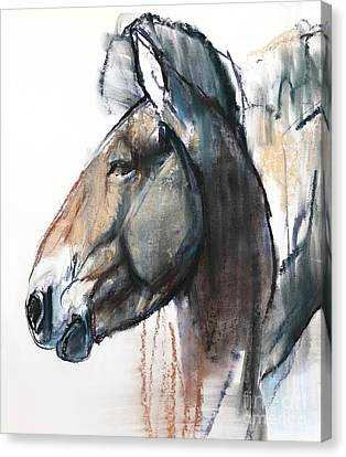 Head Study, Przewalski Canvas Print by Mark Adlington
