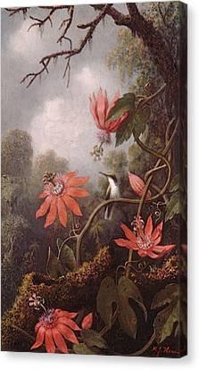 Heade Martin Johnson Hummingbird And Passionflowers Canvas Print by Martin Johnson Heade