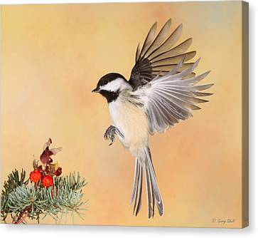 Heading For The Rose Hips Canvas Print by Gerry Sibell