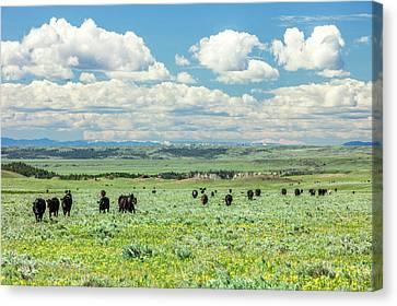 Heifer Canvas Print - Heading Home by Todd Klassy