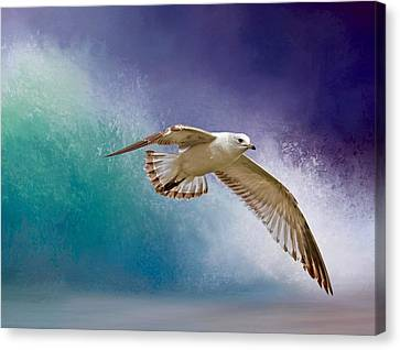 Sea Birds Canvas Print - Heading To Shore by Donna Kennedy