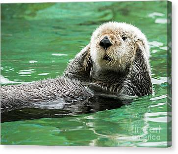 Otter Canvas Print - Hear No Evil by Mike Dawson