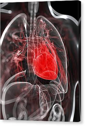Heart Anatomy, Artwork Canvas Print by Sciepro