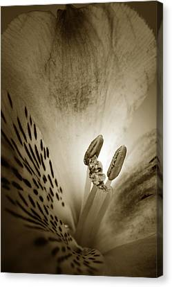 Heart And Soul Of Alstroemeria  Canvas Print by Terence Davis