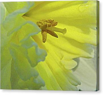 Canvas Print featuring the photograph Heart Of Daffodil by Larry Bishop