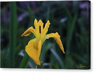 Heart Of Iris Canvas Print