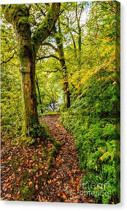 Walkway Canvas Print - Heart Of The Forest by Adrian Evans
