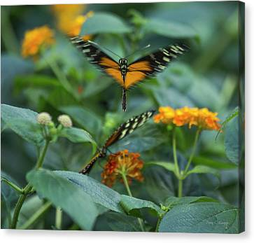 Feeding Canvas Print - Heart Of The Matter by Betsy Knapp