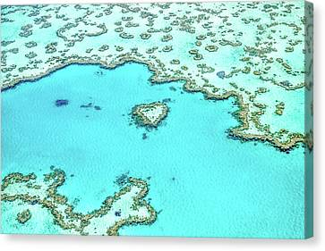 Heart Of The Reef Canvas Print by Az Jackson
