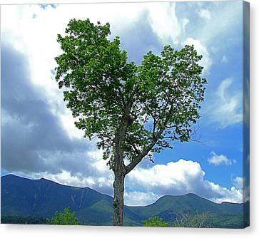 Heart Shaped Tree Canvas Print