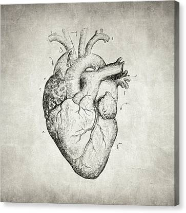 Canvas Print featuring the drawing Heart by Taylan Apukovska