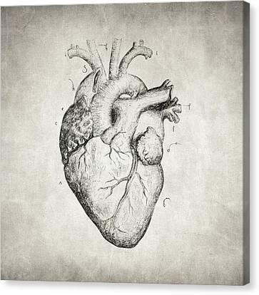 Heart Canvas Print by Taylan Apukovska