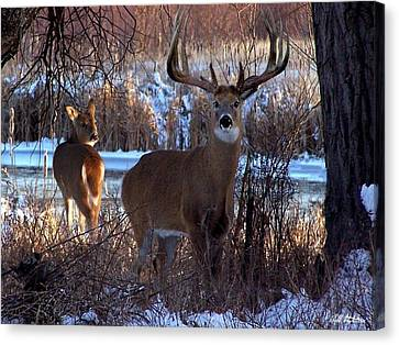 Heartbeat Of The Wild Canvas Print by Bill Stephens