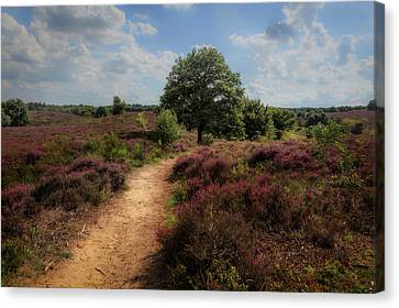 Heath Landscape With Purple Heather Flowers Canvas Print