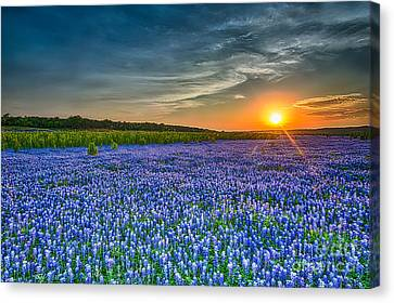 Heavely Bluebonnet Sunset Canvas Print by Tod and Cynthia Grubbs