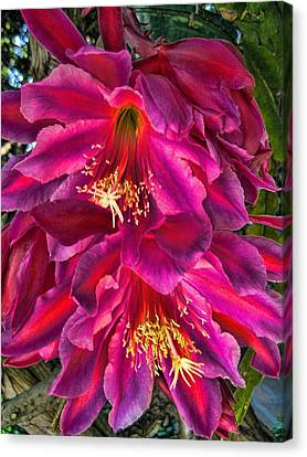 Canvas Print featuring the photograph Heavenly Flower by Paul Cutright