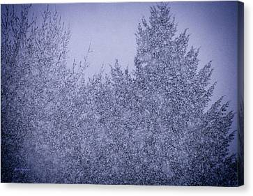 Heavy Snow Canvas Print by Mick Anderson