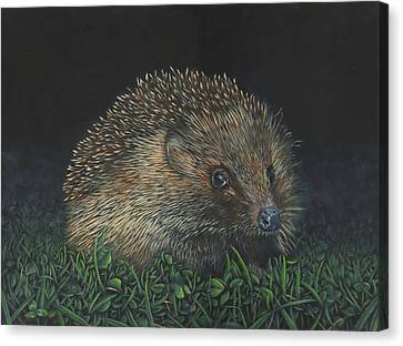Hedgehog Canvas Print