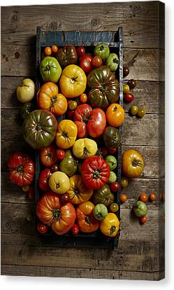 Heirloom Tomatoes Canvas Print by Lew Robertson