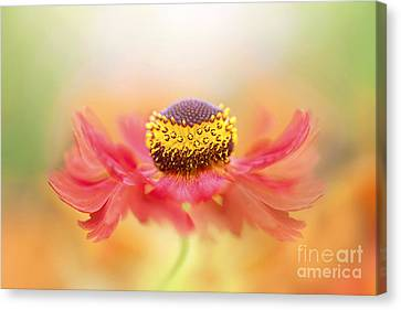 Helenium Flower Canvas Print by Jacky Parker