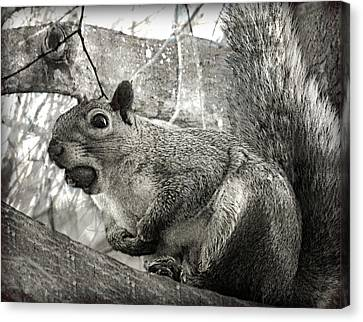Pesky Squirrel Canvas Print by Andrew Hunter